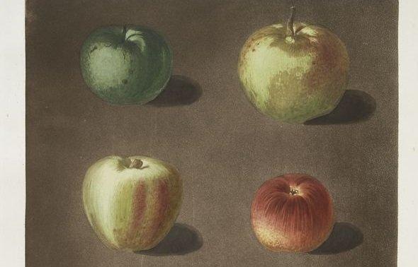 Apples, by George Brookshaw, form NYPL